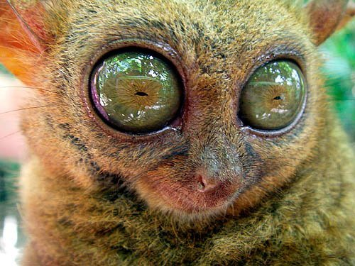 cute photos of animals with big eyes animals zone