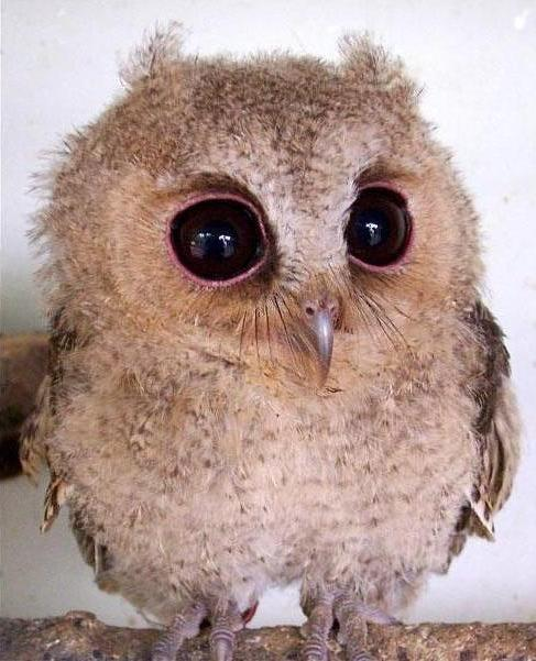 Cute Photos of Animals with Big Eyes | Animals Zone