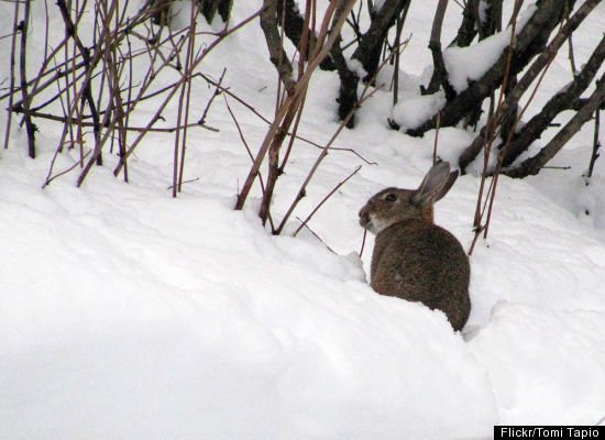 How Animals Finding Food In The Winter | Animals Zone