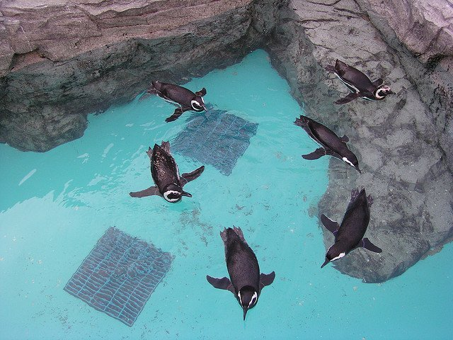 These penguins look as if they were performing a show!