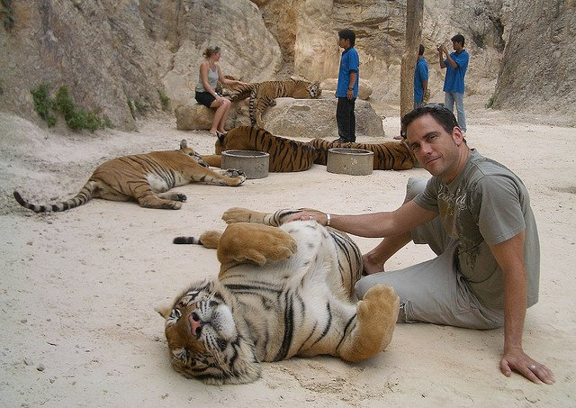 Man and Tiger in playful mood.