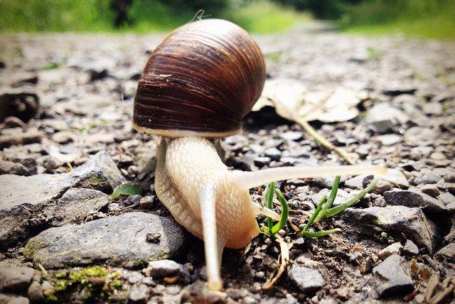 snail going zzz