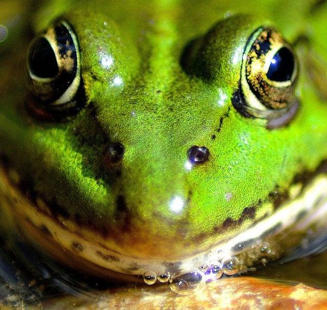 Creepy frog face