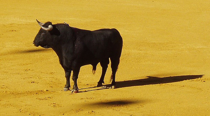 National Animal of Spain Bull