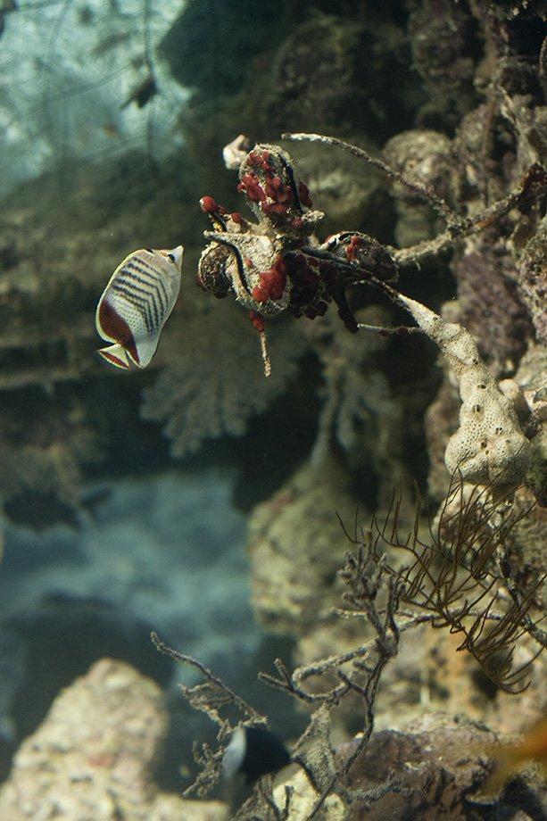 Red_Sea deep sea creatures