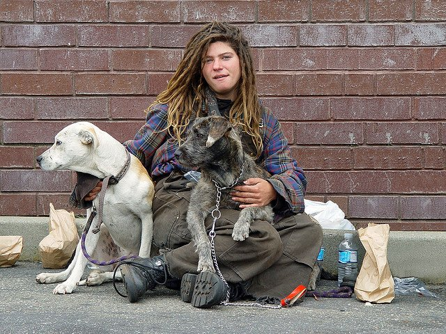 Dogs with homeless person