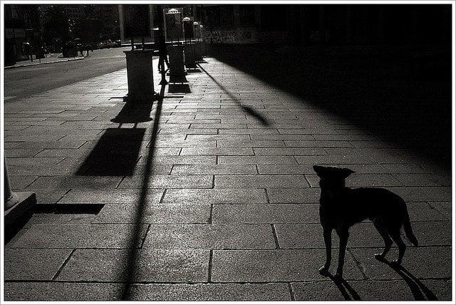 dog night shadow