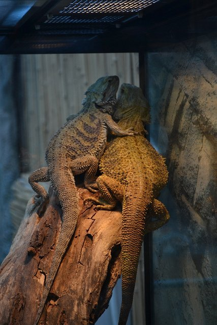 animal love lizard hug