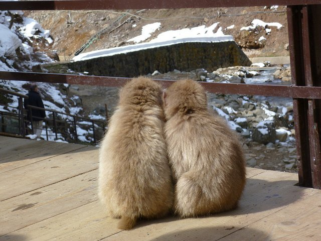 snow monkeys holding hands