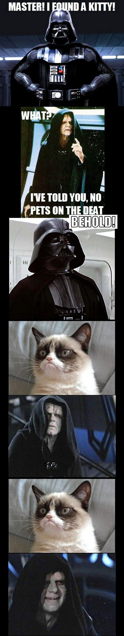Dark side cat