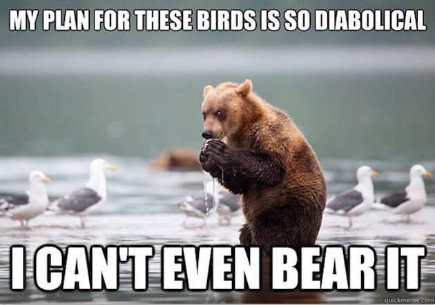 Evil Plotting Bear Meme