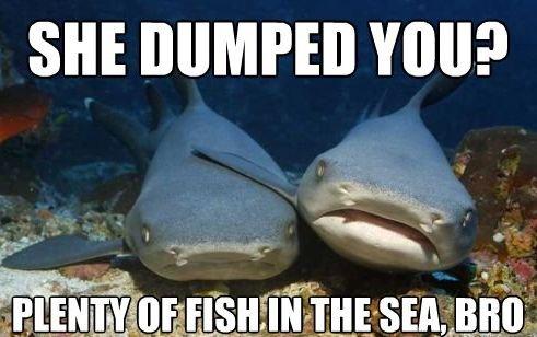 compassionate shark bros meme