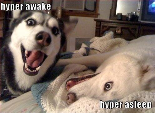 dog meme hyper awake hyper asleep