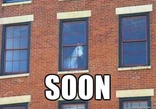 horse waiting window meme