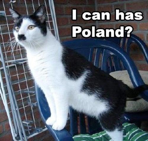 i can has poland hitler cat meme