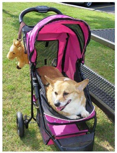 Stroller for dogs