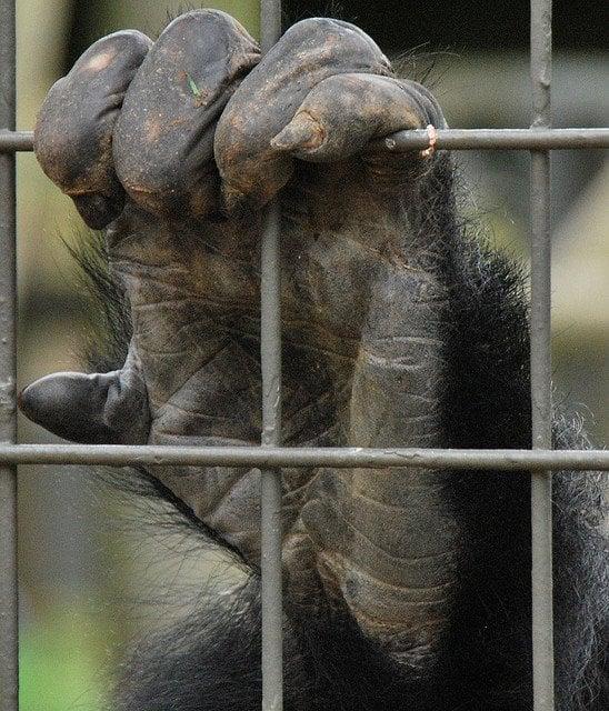 Head Of Gorilla: Seven Facts About Gorillas