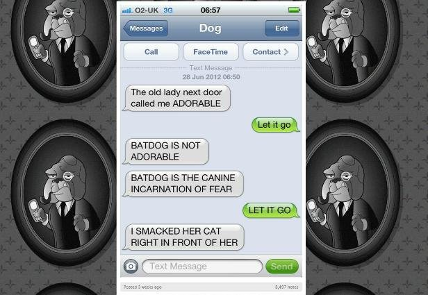 adorable batdog is fierce