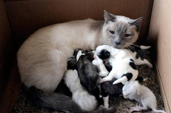 Animals adopt baby animals
