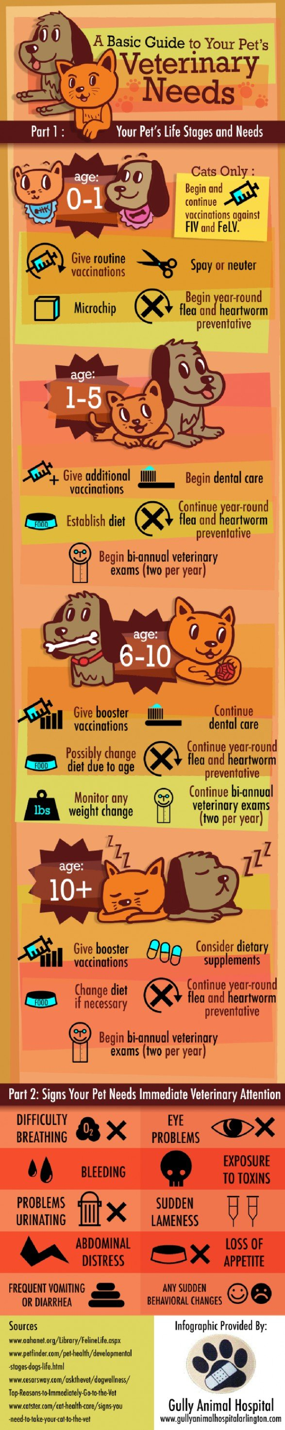 A Basic Guide to Your Pet