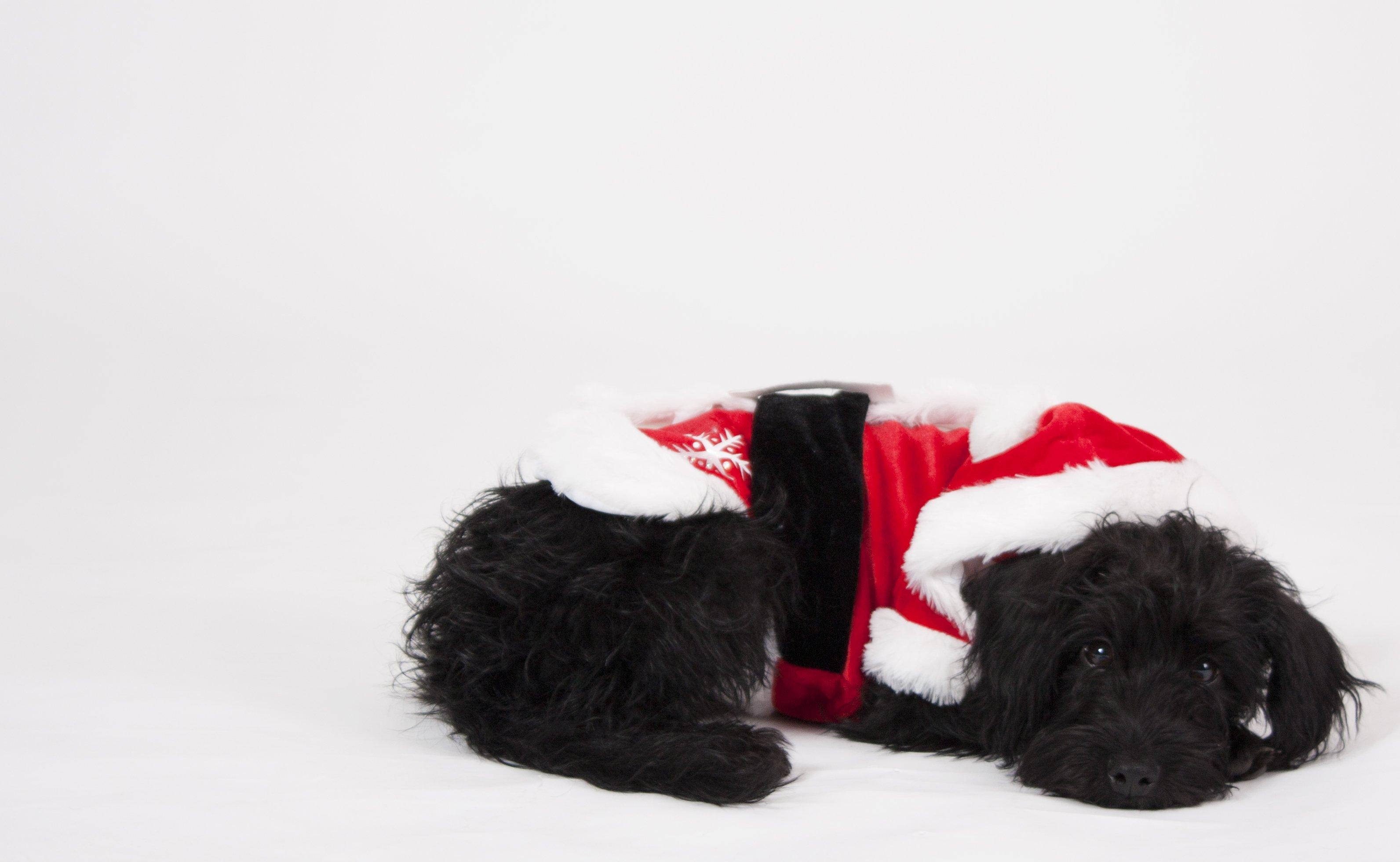 black-santa-dog