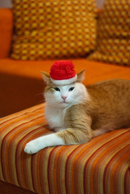 santa-claus-hat-cat