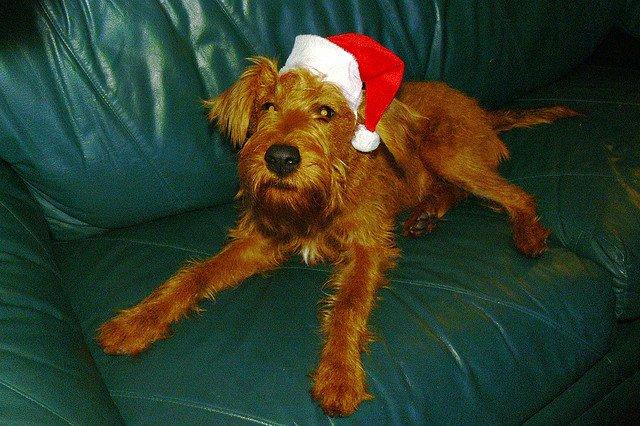 cute-hat-santa-dog