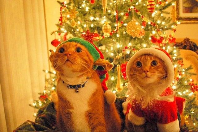 cute-santa-cats