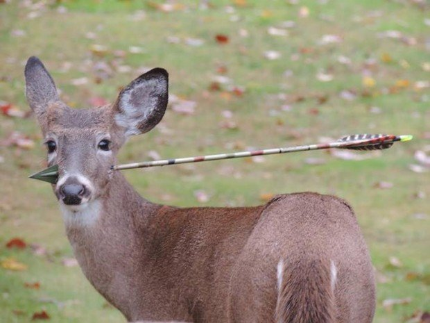 deer-arrow-through-face