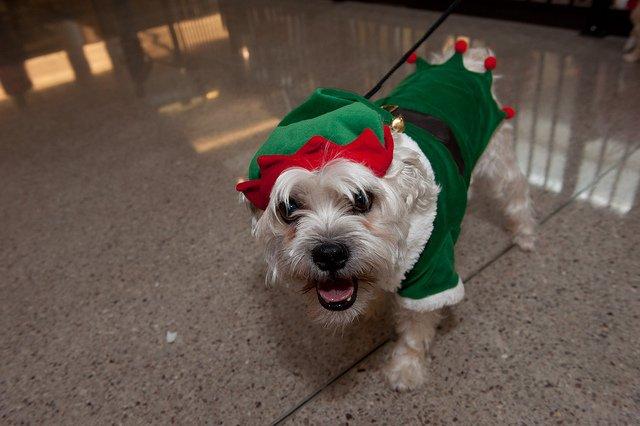 elf-dog