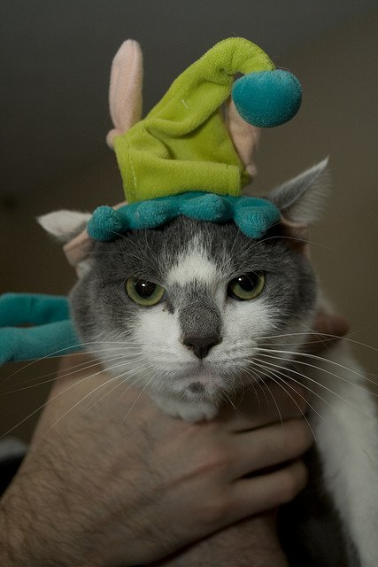 cat-elf-hat
