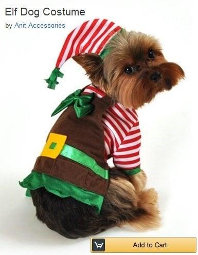 little-elf-dog