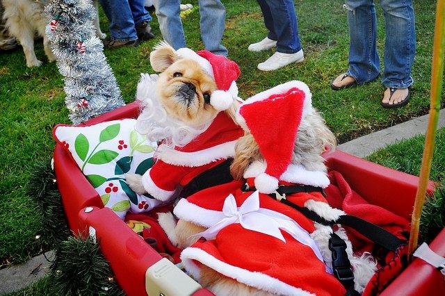 mrs-santa-dog
