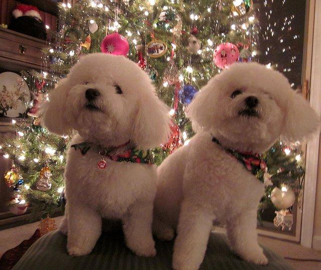 christmas-tie