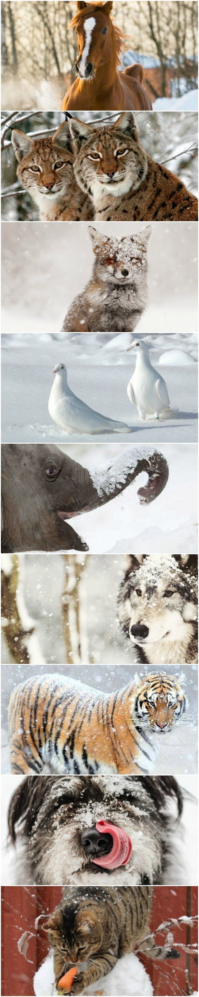 animals-enjoying-the-snow