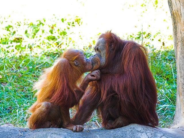 cute-animals-kissing
