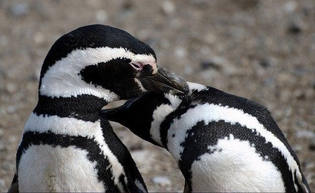 penguins-love