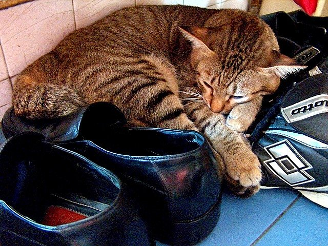 cat-among-the-shoes