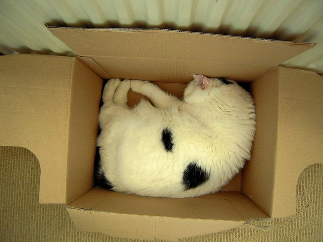 cat-sleeping-in-a-box