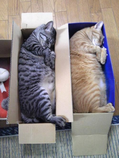 cat-sleeping-in-the-box