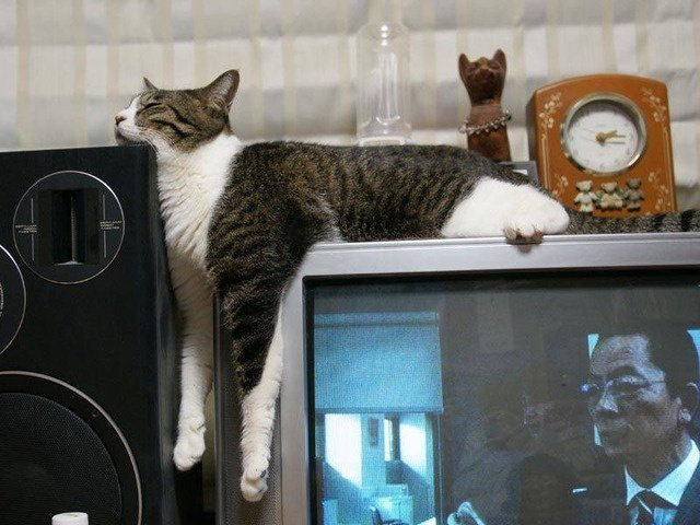 kitten-sleeping-on-a-tv
