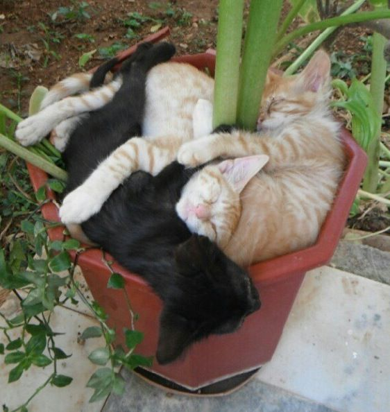 sleeping-kittens