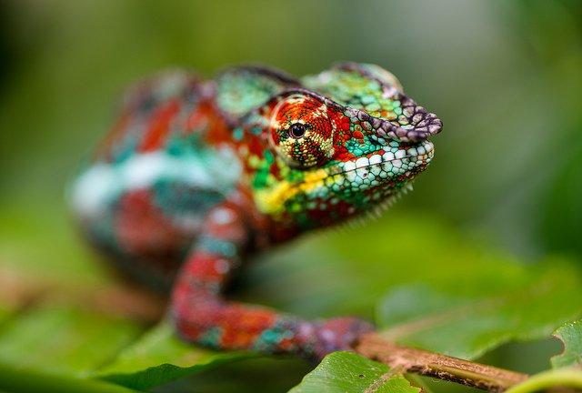 bright-chameleon