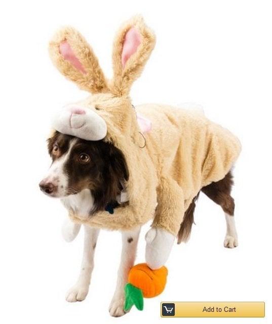 bunny-dog-costume