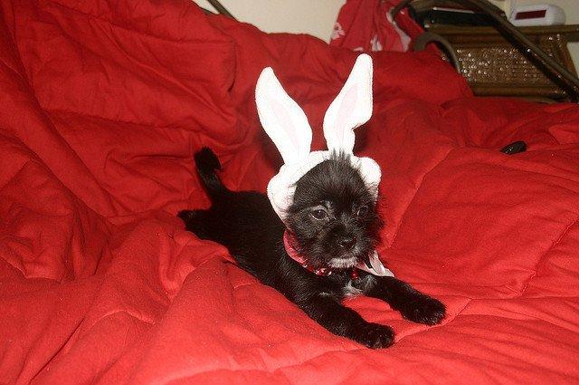 bunny-puppy