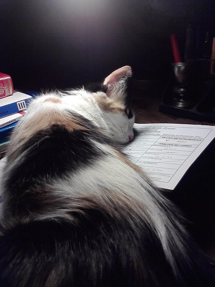 Uno de los gatos de Cristina durmiendo sobre su trabajo.