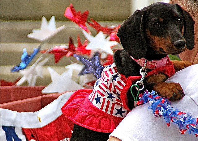 Cutest Pictures of Patriotic Animals | Animals Zone