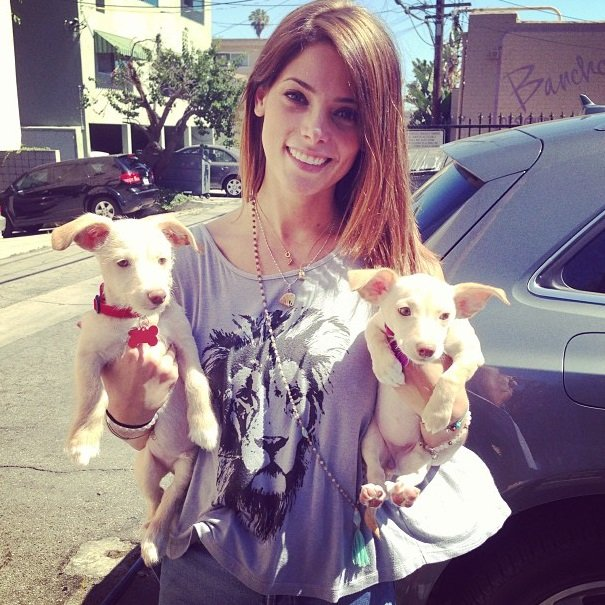 Ashley Greene with her puppies | Animals Zone