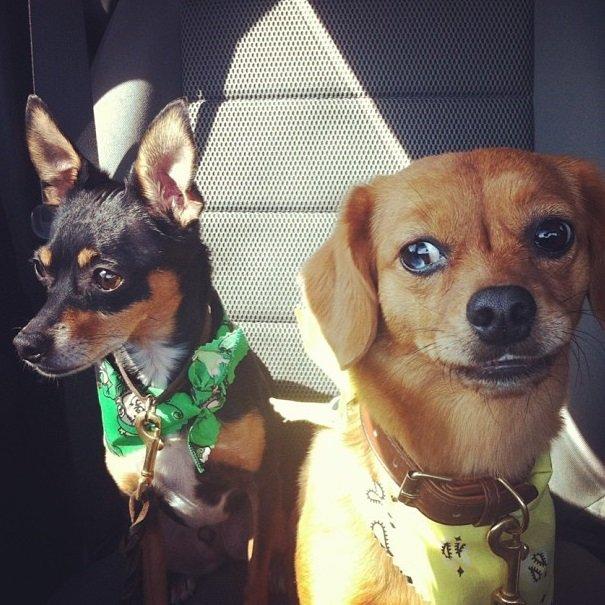 Carrie Underwood's doggies   Animals Zone