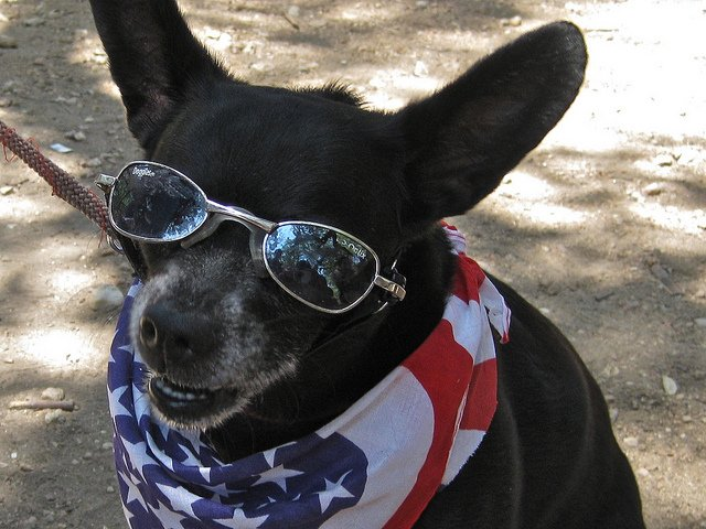 Rocking the red, white and blue today! #happy4thofjuly | Animals Zone